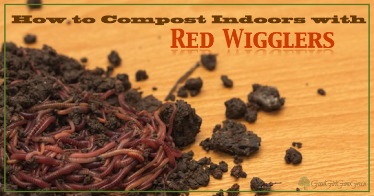 How to Compost with Red Wigglers GoodGirlGoneGreen.com #worms #redwigglers #compost #composting