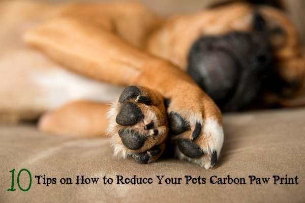 10 ways to reduce your pets paw print #nontoxic #health #pets Environment