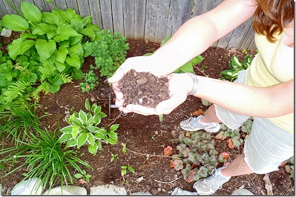 Learn how to compost the right way