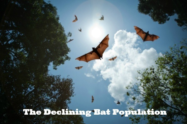 Effects of the Declining Bat Population #Ecology #Health
