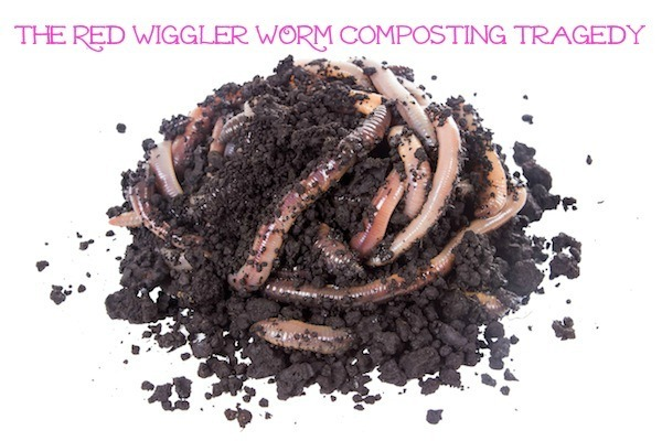 Composting with red wigglers