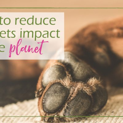 10 Tips on How to Reduce Your Pets Carbon Paw Print