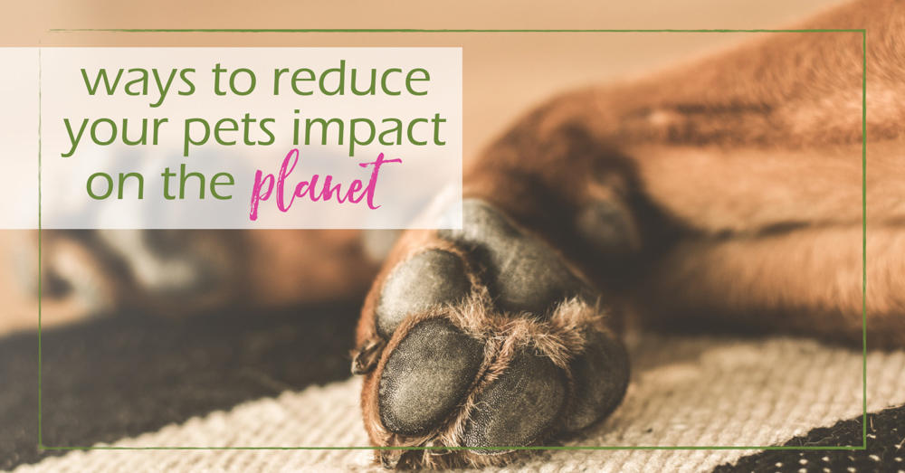 10 ways to reduce your pets impact on the planet - GoodGirlGoneGreen
