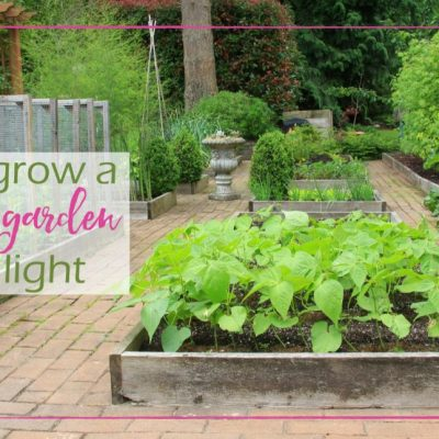 How to Grow a Vegetable Garden in Low Light