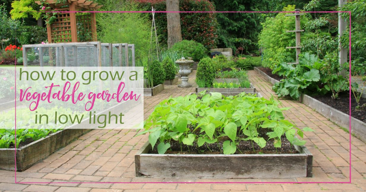 How To Grow A Vegetable Garden In Low Light Good Girl Gone Green