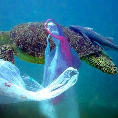 Plastic pollution. An interactive plastic bag ban map